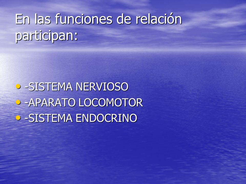 En las funciones de relación participan: -SISTEMA NERVIOSO -APARATO LOCOMOTOR -SISTEMA ENDOCRINO