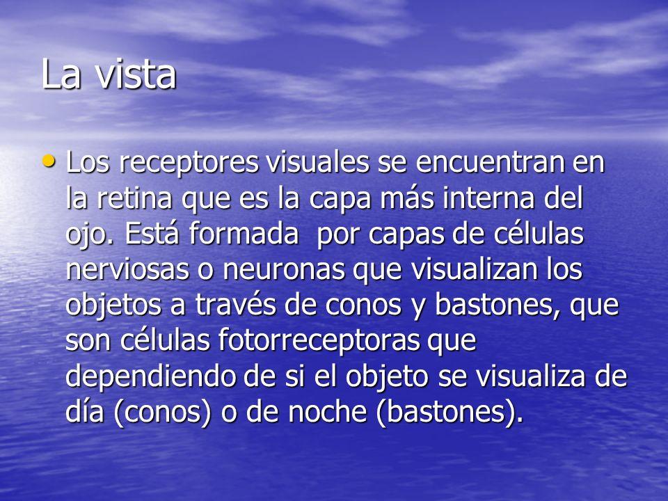 La vista Los receptores visuales se encuentran en la retina que es la capa más interna del ojo. Está formada por capas de células nerviosas o neuronas