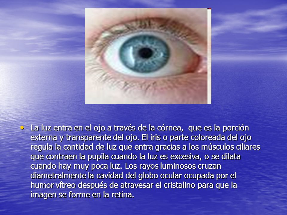 d La luz entra en el ojo a través de la córnea, que es la porción externa y transparente del ojo. El iris o parte coloreada del ojo regula la cantidad