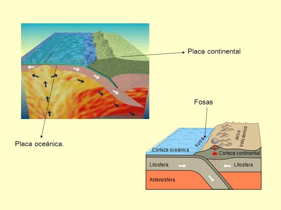Placa oceánica. Placa continental Fosas