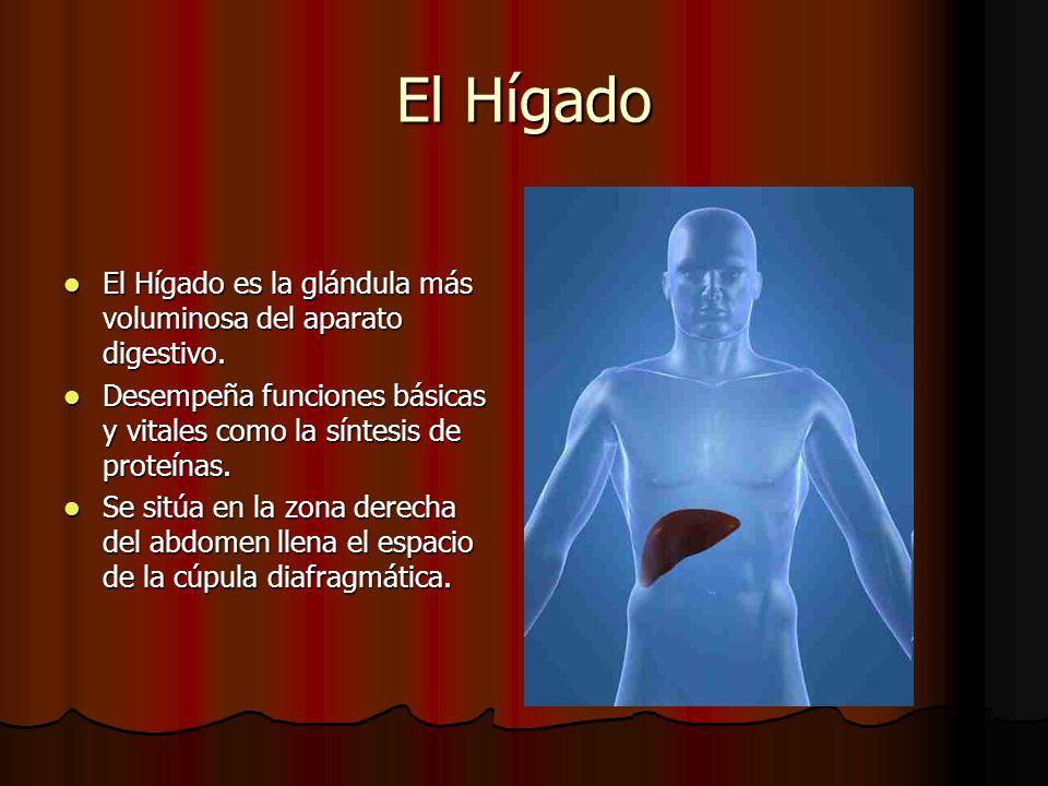 El Hígado El Hígado es la glándula más voluminosa del aparato digestivo. El Hígado es la glándula más voluminosa del aparato digestivo. Desempeña func