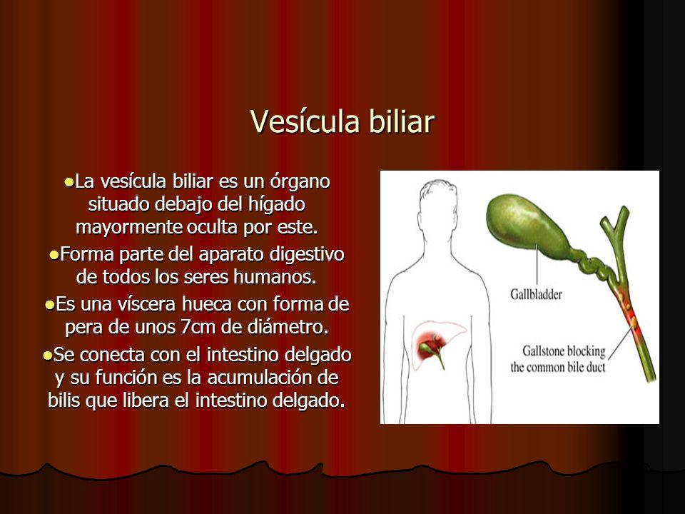Vesícula biliar La vesícula biliar es un órgano situado debajo del hígado mayormente oculta por este. La vesícula biliar es un órgano situado debajo d