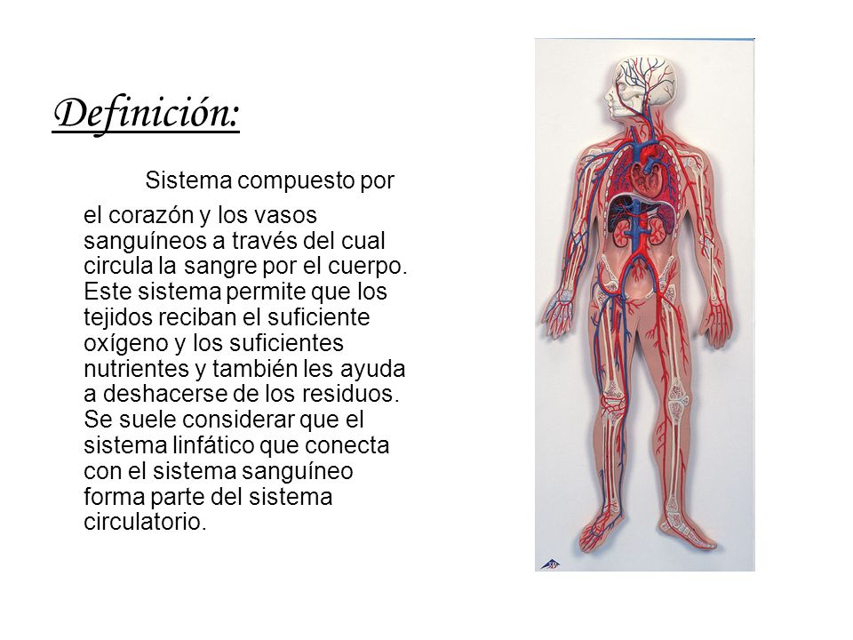 Definición: Sistema compuesto por el corazón y los vasos sanguíneos a través del cual circula la sangre por el cuerpo. Este sistema permite que los te