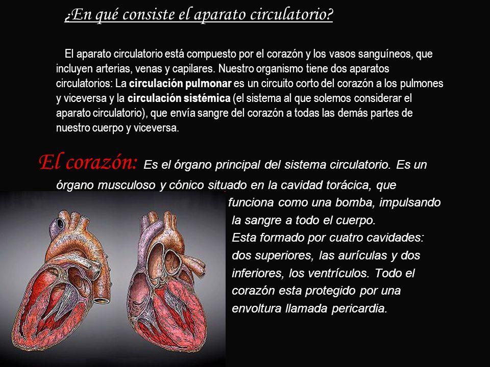 ¿ En qué consiste el aparato circulatorio? El aparato circulatorio está compuesto por el corazón y los vasos sanguíneos, que incluyen arterias, venas