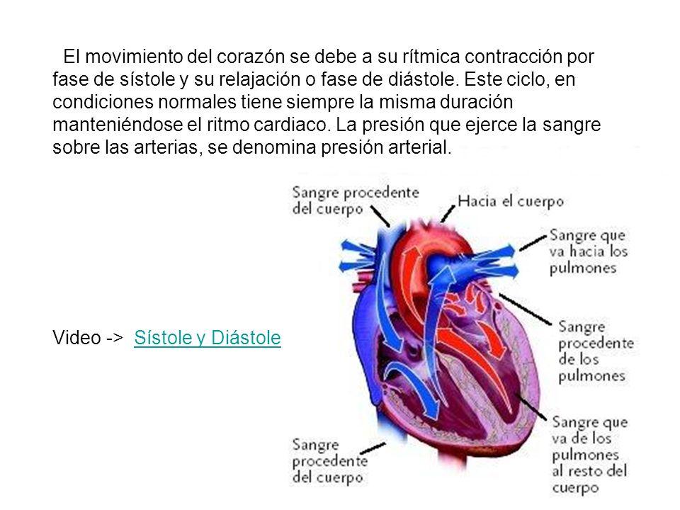 El movimiento del corazón se debe a su rítmica contracción por fase de sístole y su relajación o fase de diástole. Este ciclo, en condiciones normales