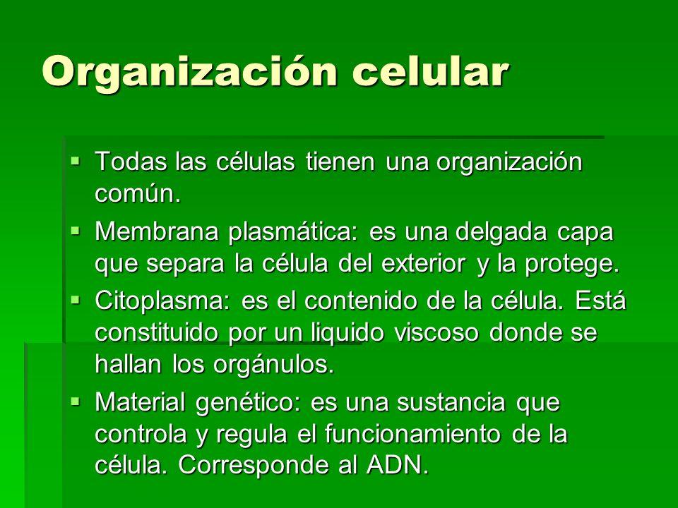 Organización celular Todas las células tienen una organización común. Todas las células tienen una organización común. Membrana plasmática: es una del