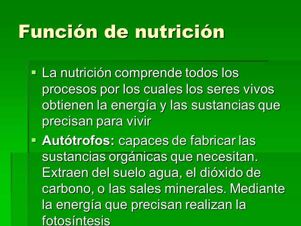 Función de nutrición La nutrición comprende todos los procesos por los cuales los seres vivos obtienen la energía y las sustancias que precisan para v
