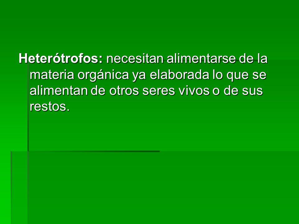 Heterótrofos: necesitan alimentarse de la materia orgánica ya elaborada lo que se alimentan de otros seres vivos o de sus restos.