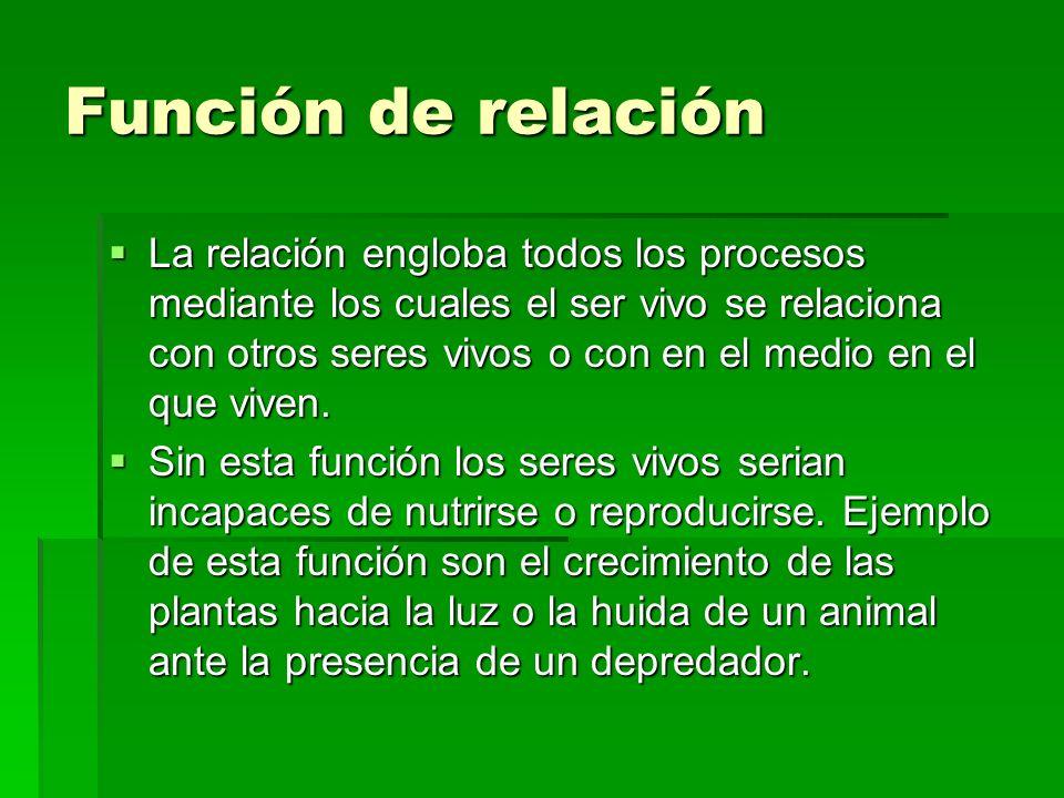 Función de relación La relación engloba todos los procesos mediante los cuales el ser vivo se relaciona con otros seres vivos o con en el medio en el