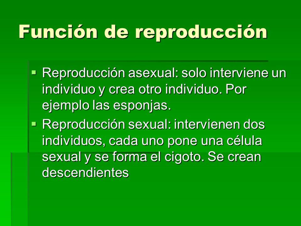 Función de reproducción Reproducción asexual: solo interviene un individuo y crea otro individuo. Por ejemplo las esponjas. Reproducción sexual: inter