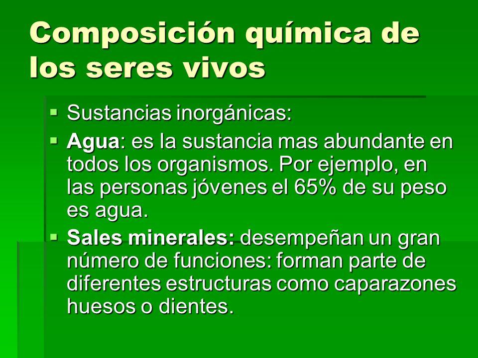 Composición química de los seres vivos Sustancias inorgánicas: Agua: es la sustancia mas abundante en todos los organismos. Por ejemplo, en las person