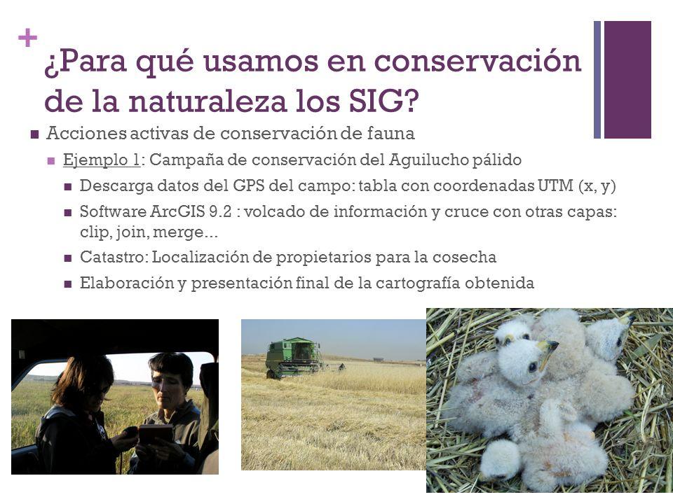 + ¿Para qué usamos en conservación de la naturaleza los SIG? Acciones activas de conservación de fauna Ejemplo 1: Campaña de conservación del Aguiluch