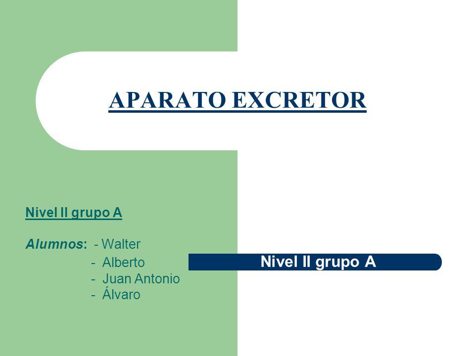 APARATO EXCRETOR Nivel II grupo A Alumnos: - Walter - Alberto Nivel II grupo A - Juan Antonio - Álvaro
