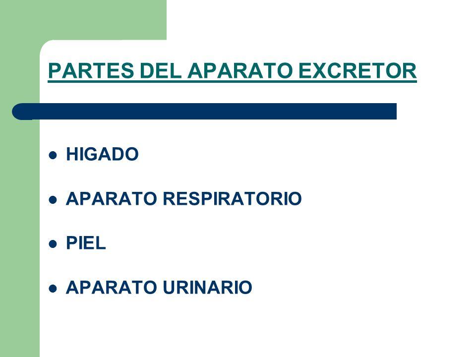 PARTES DEL APARATO EXCRETOR HIGADO APARATO RESPIRATORIO PIEL APARATO URINARIO