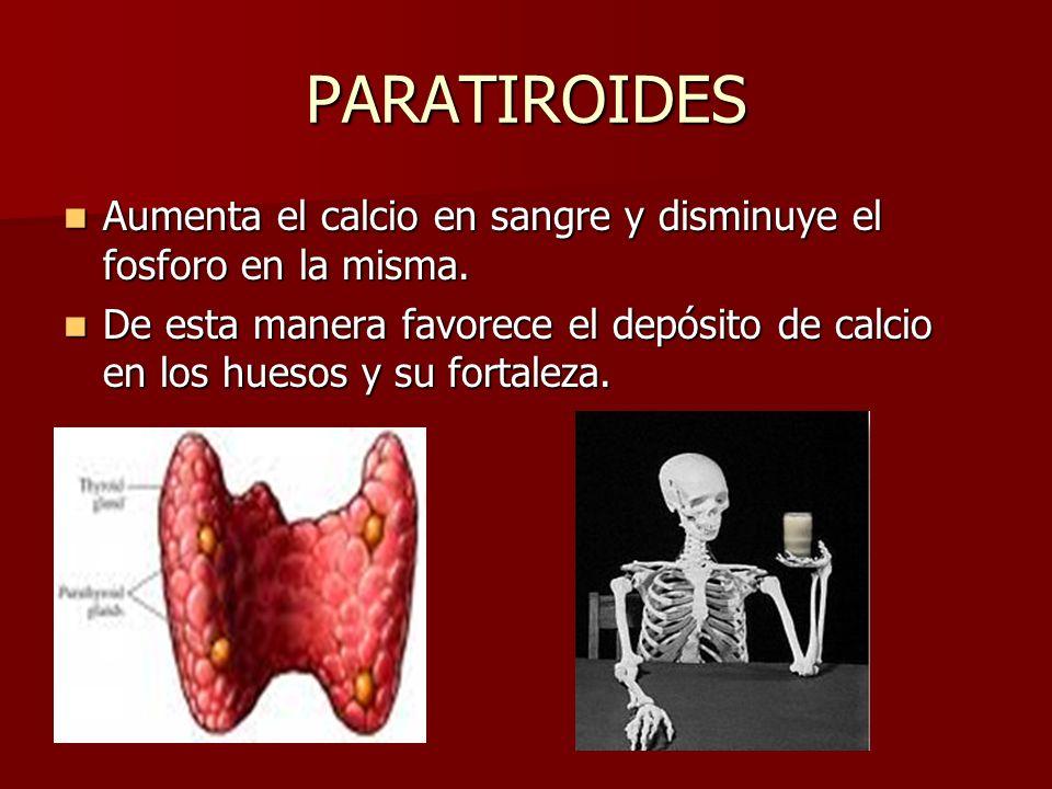 PARATIROIDES Aumenta el calcio en sangre y disminuye el fosforo en la misma. Aumenta el calcio en sangre y disminuye el fosforo en la misma. De esta m