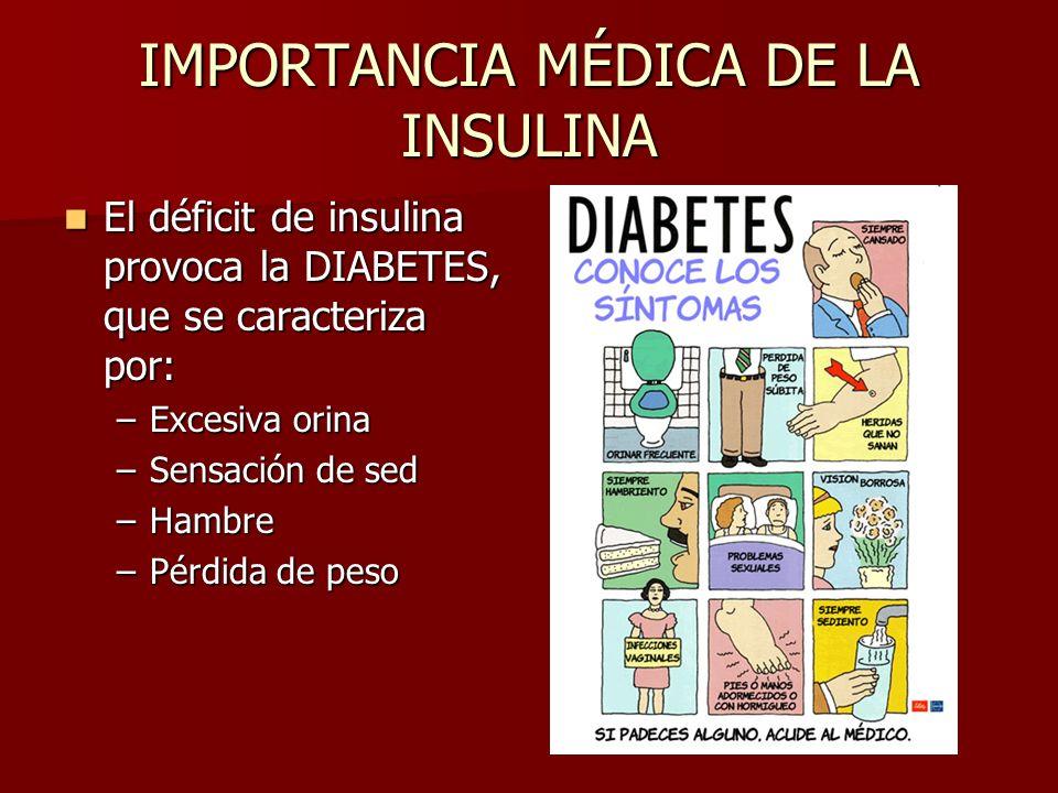IMPORTANCIA MÉDICA DE LA INSULINA El déficit de insulina provoca la DIABETES, que se caracteriza por: El déficit de insulina provoca la DIABETES, que se caracteriza por: –Excesiva orina –Sensación de sed –Hambre –Pérdida de peso