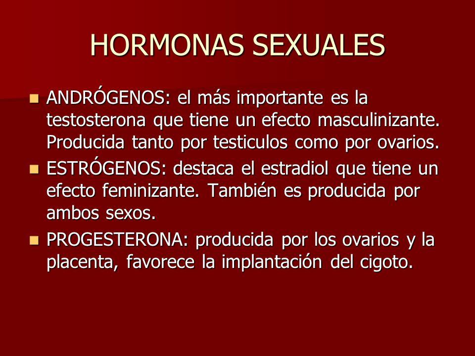 HORMONAS SEXUALES ANDRÓGENOS: el más importante es la testosterona que tiene un efecto masculinizante. Producida tanto por testiculos como por ovarios