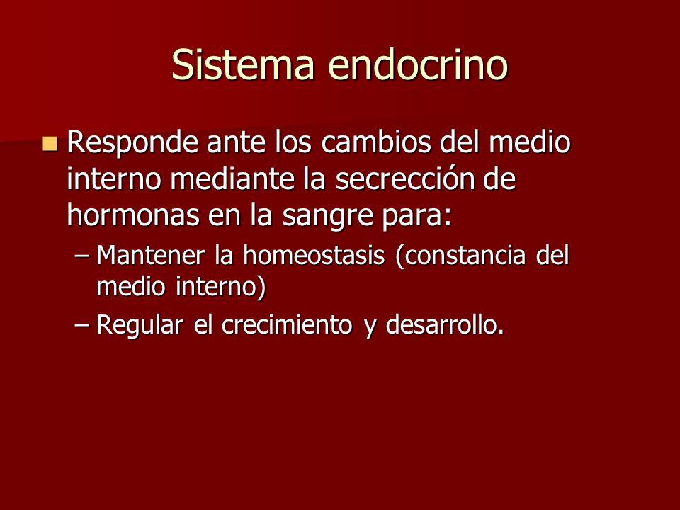 Sistema endocrino Responde ante los cambios del medio interno mediante la secrección de hormonas en la sangre para: Responde ante los cambios del medio interno mediante la secrección de hormonas en la sangre para: –Mantener la homeostasis (constancia del medio interno) –Regular el crecimiento y desarrollo.