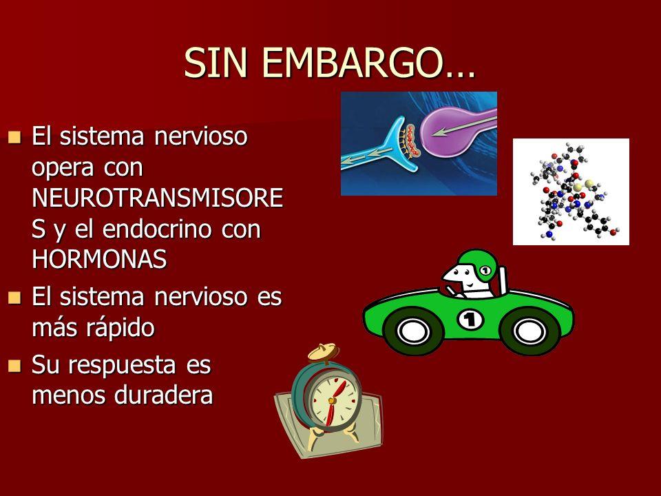 SIN EMBARGO… El sistema nervioso opera con NEUROTRANSMISORE S y el endocrino con HORMONAS El sistema nervioso opera con NEUROTRANSMISORE S y el endocrino con HORMONAS El sistema nervioso es más rápido El sistema nervioso es más rápido Su respuesta es menos duradera Su respuesta es menos duradera