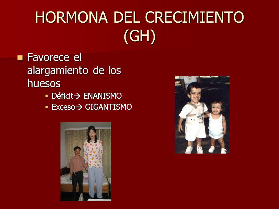 HORMONA DEL CRECIMIENTO (GH) Favorece el alargamiento de los huesos Favorece el alargamiento de los huesos Déficit ENANISMO Déficit ENANISMO Exceso GIGANTISMO Exceso GIGANTISMO