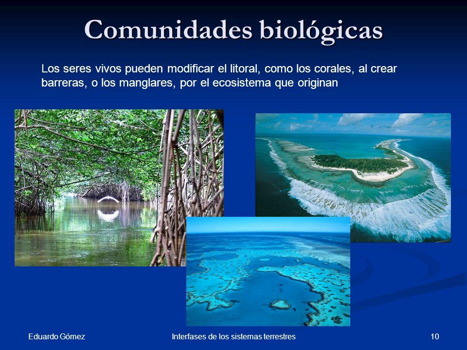 Comunidades biológicas Eduardo Gómez 10Interfases de los sistemas terrestres Los seres vivos pueden modificar el litoral, como los corales, al crear b