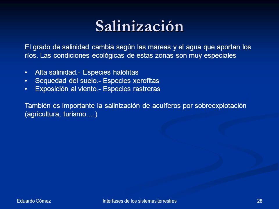 Eduardo Gómez 28Interfases de los sistemas terrestres Salinización El grado de salinidad cambia según las mareas y el agua que aportan los ríos. Las c