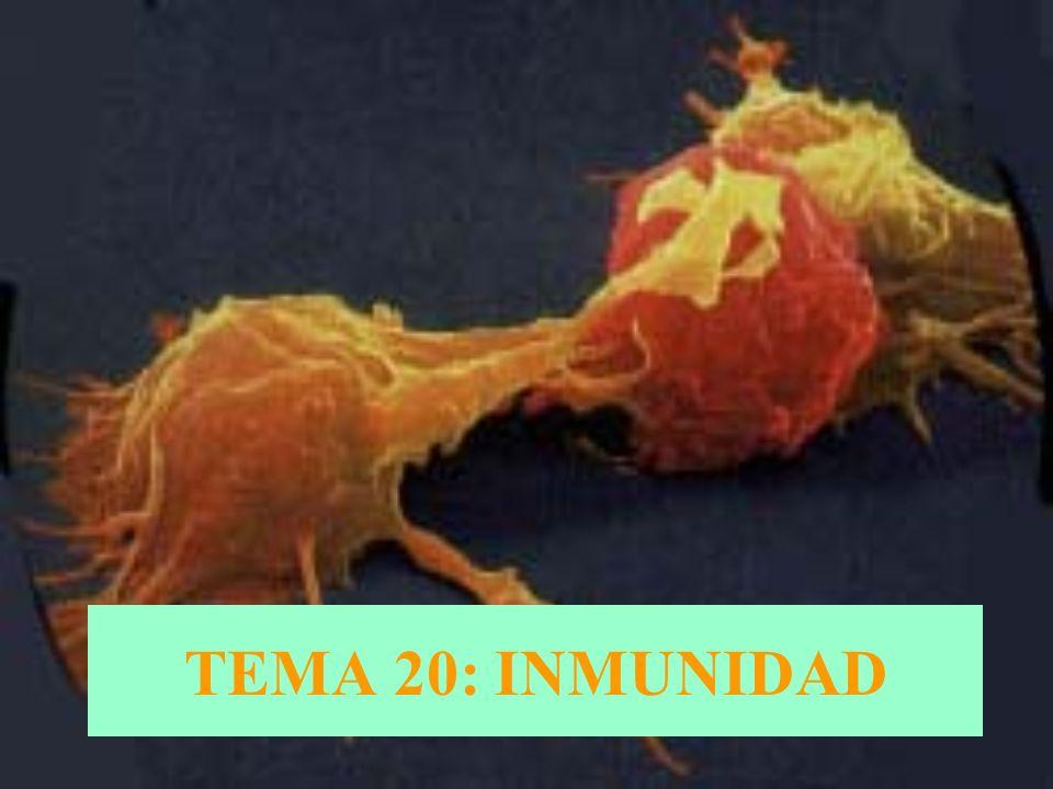 TEMA 20: INMUNIDAD