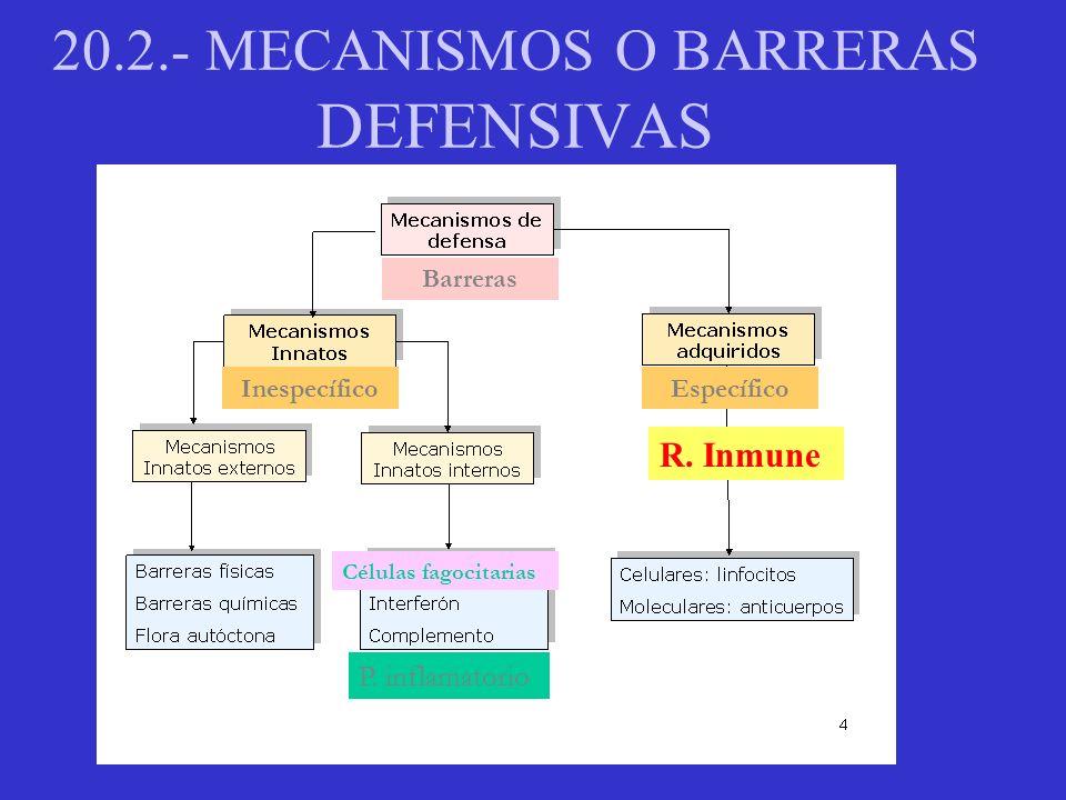 20.2.-BARRERAS INESPECÍFICAS Proceso inflamatorio Neutrofilos y macrófagos: Fagocitosis de cualquier microorganismo.