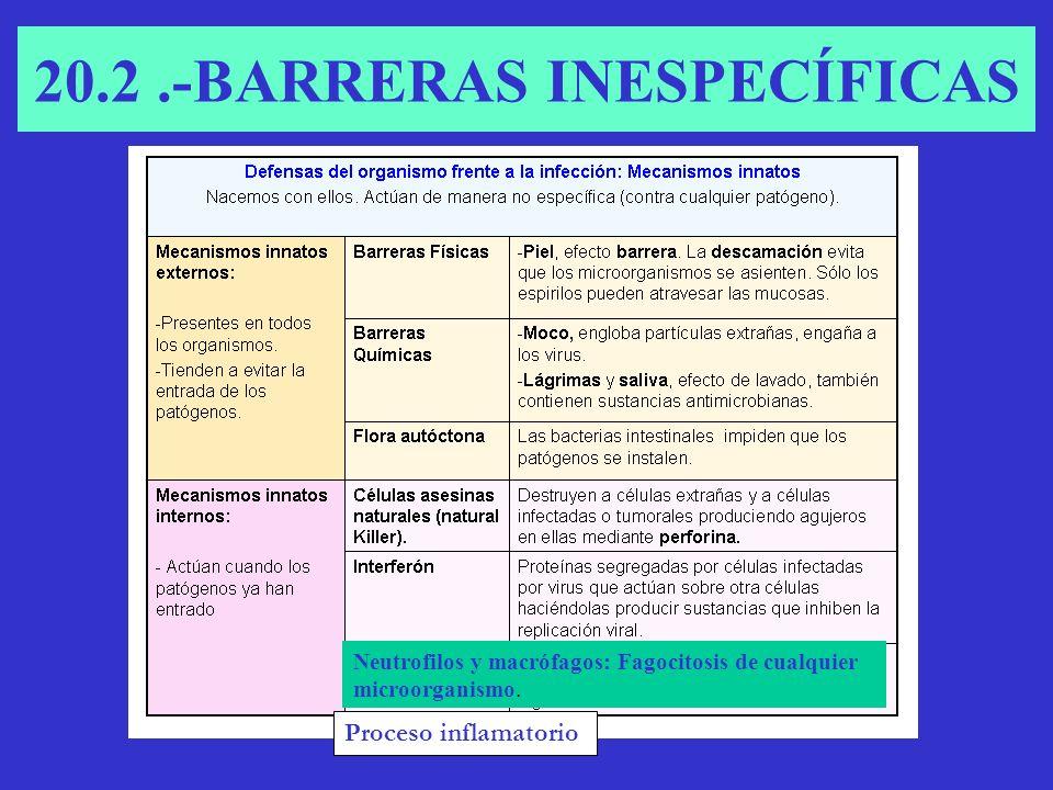 CÉLULAS FAGOCITARIAS RESPONSABLES DE LA BARRERA INESPECÍFICA