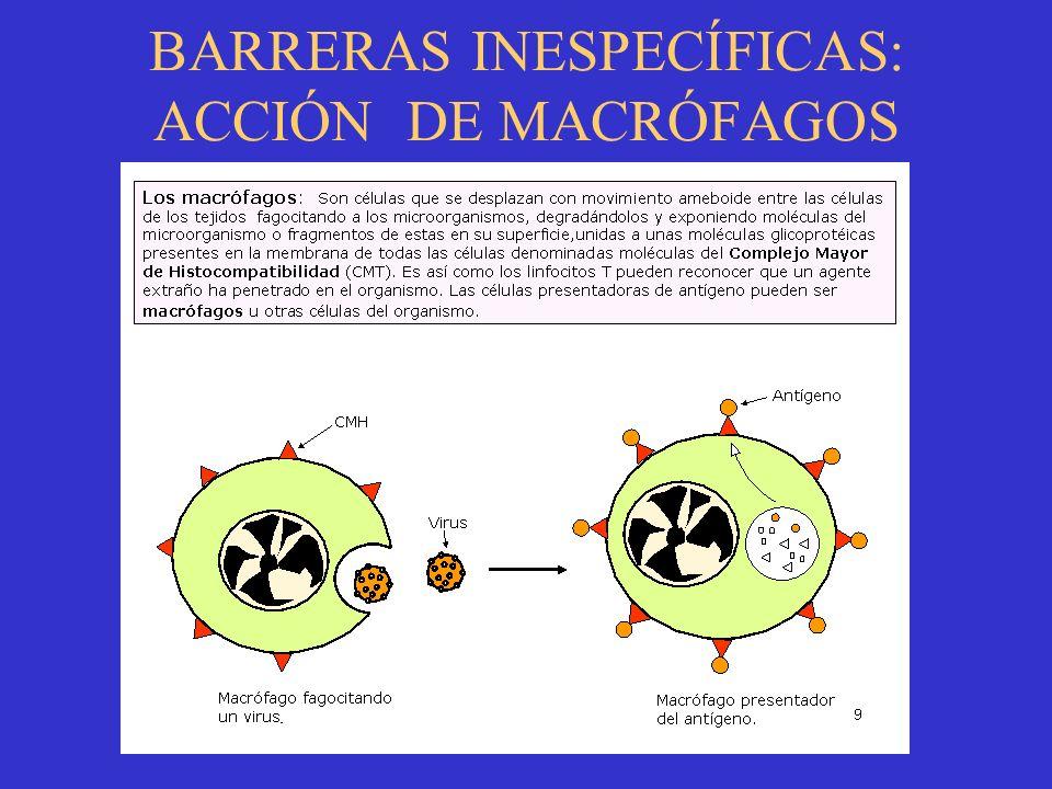BARRERAS INESPECÍFICAS: ACCIÓN DE MACRÓFAGOS
