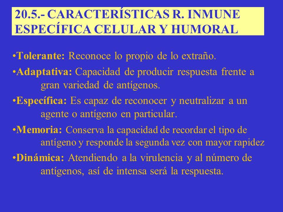 20.5.- CARACTERÍSTICAS R.
