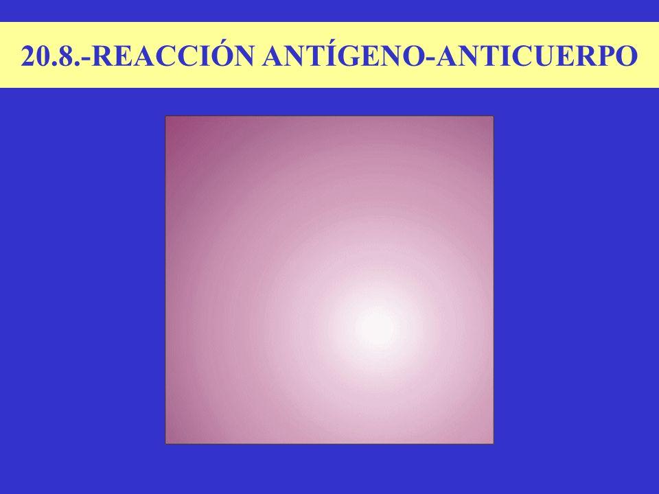 20.8.-REACCIÓN ANTÍGENO-ANTICUERPO