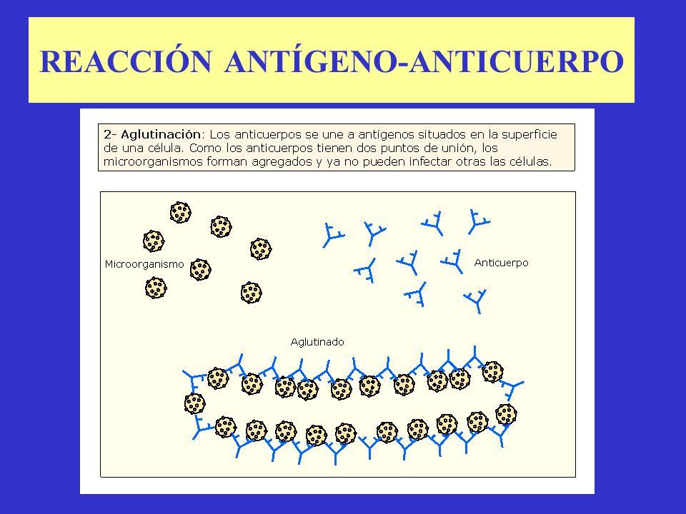 20.8.- REACCIÓN ANTÍGENO- ANTICUERPO