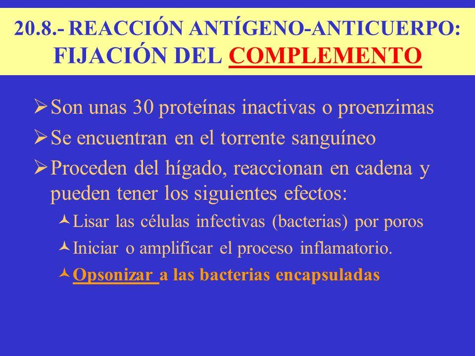 Son unas 30 proteínas inactivas o proenzimas Se encuentran en el torrente sanguíneo Proceden del hígado, reaccionan en cadena y pueden tener los siguientes efectos: Lisar las células infectivas (bacterias) por poros Iniciar o amplificar el proceso inflamatorio.