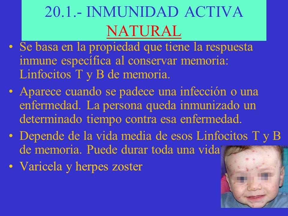 20.1.- INMUNIDAD ACTIVA NATURAL Se basa en la propiedad que tiene la respuesta inmune específica al conservar memoria: Linfocitos T y B de memoria.