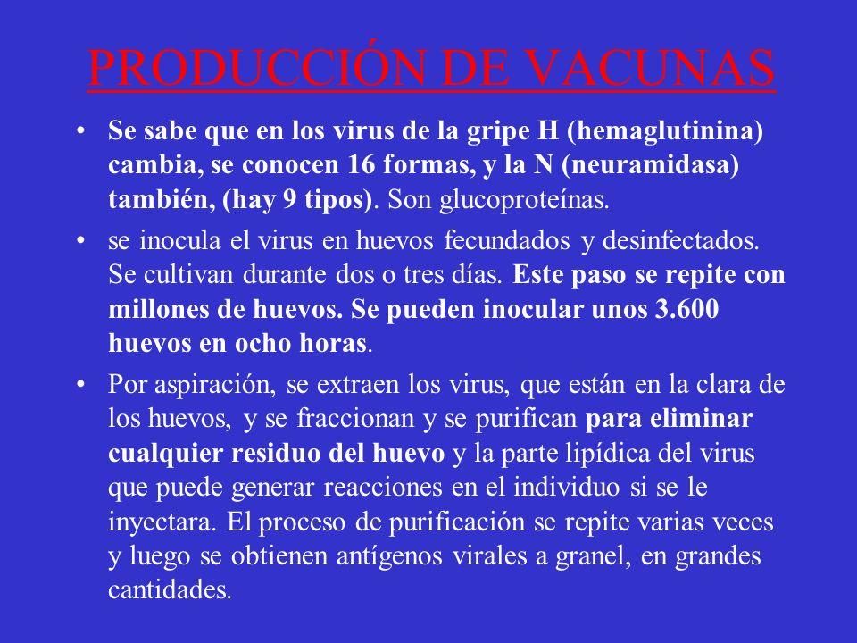PRODUCCIÓN DE VACUNAS Se sabe que en los virus de la gripe H (hemaglutinina) cambia, se conocen 16 formas, y la N (neuramidasa) también, (hay 9 tipos).
