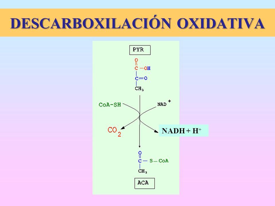 DESCARBOXILACIÓN OXIDATIVA NADH + H +