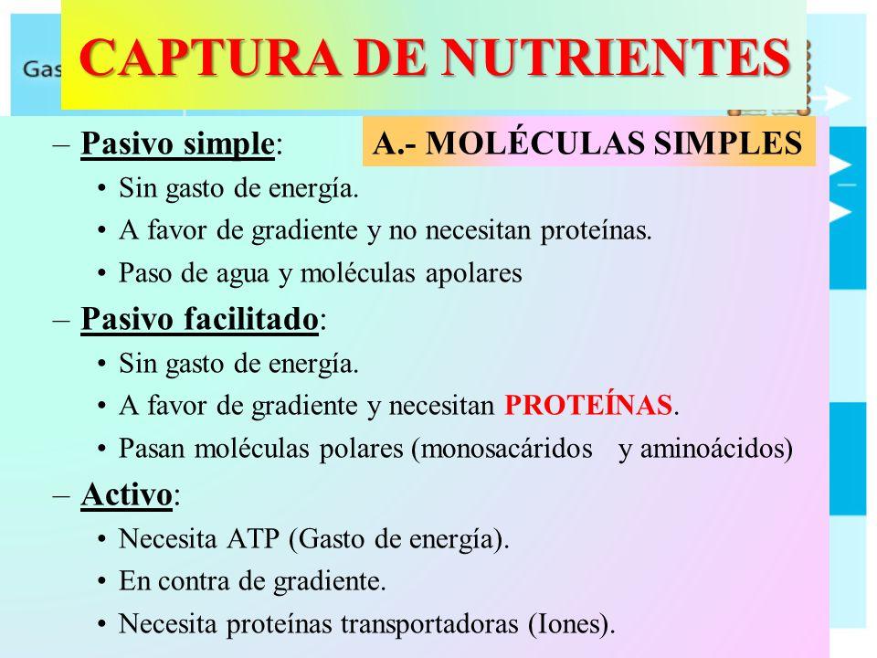 CAPTURA DE NUTRIENTES –Pasivo simple: Sin gasto de energía. A favor de gradiente y no necesitan proteínas. Paso de agua y moléculas apolares –Pasivo f