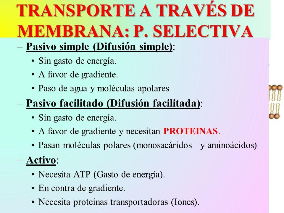 TRANSPORTE A TRAVÉS DE MEMBRANA: P. SELECTIVA –Pasivo simple (Difusión simple): Sin gasto de energía. A favor de gradiente. Paso de agua y moléculas a