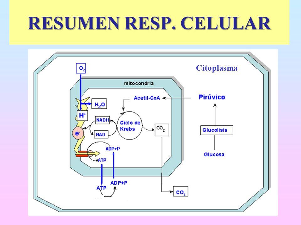 RESUMEN RESP. CELULAR Citoplasma