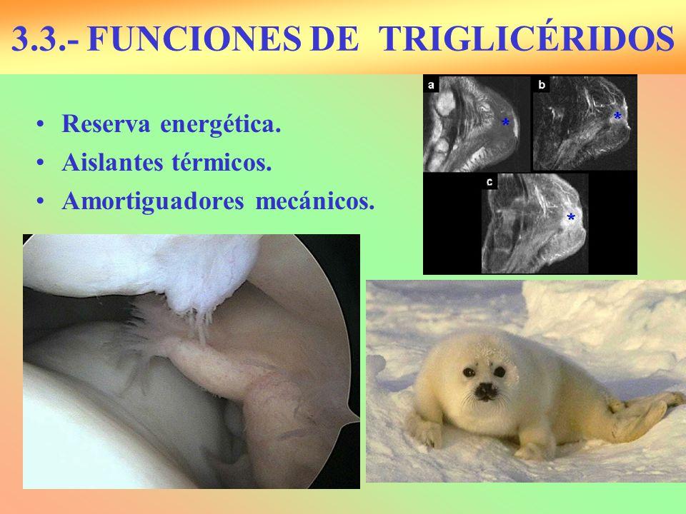 3.3.- FUNCIONES DE TRIGLICÉRIDOS Reserva energética. Aislantes térmicos. Amortiguadores mecánicos.