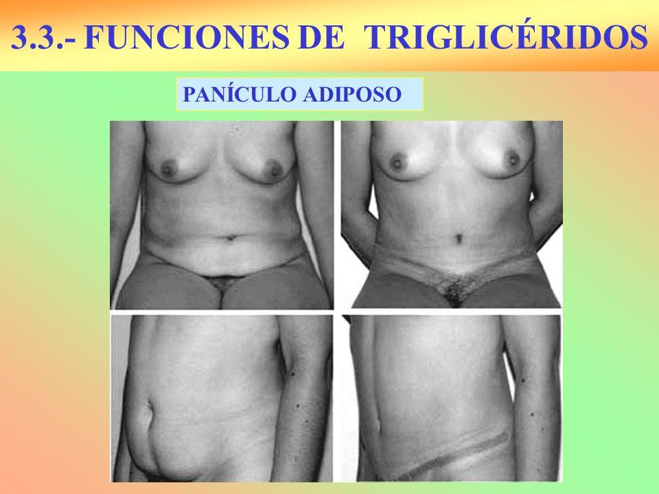 3.3.- FUNCIONES DE TRIGLICÉRIDOS PANÍCULO ADIPOSO