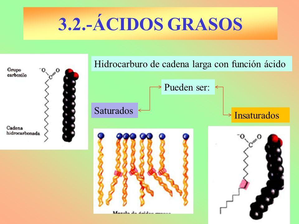 3.2.-ÁCIDOS GRASOS Hidrocarburo de cadena larga con función ácido Pueden ser: Saturados Insaturados