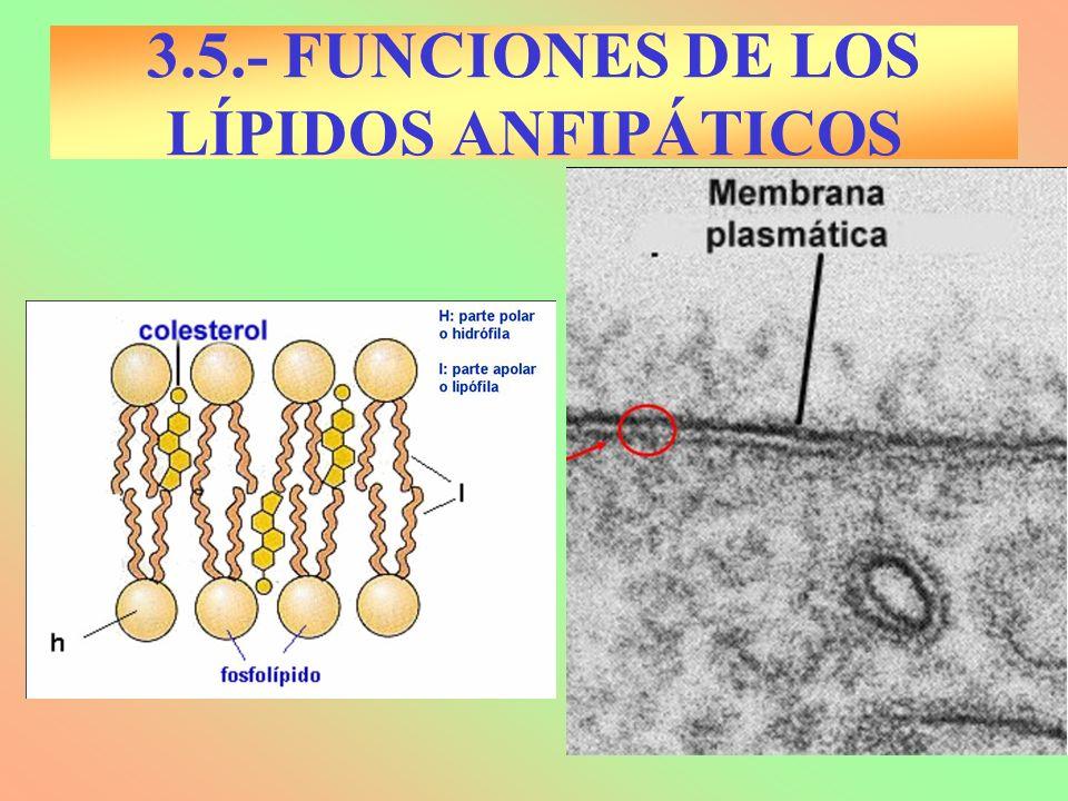 3.5.- FUNCIONES DE LOS LÍPIDOS ANFIPÁTICOS