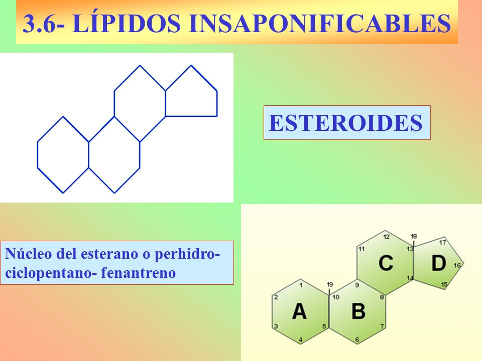 3.6- LÍPIDOS INSAPONIFICABLES ESTEROIDES Núcleo del esterano o perhidro- ciclopentano- fenantreno