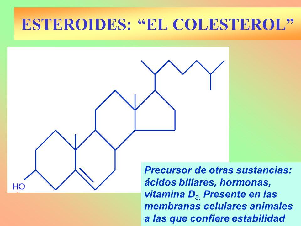 Precursor de otras sustancias: ácidos biliares, hormonas, vitamina D 3. Presente en las membranas celulares animales a las que confiere estabilidad ES