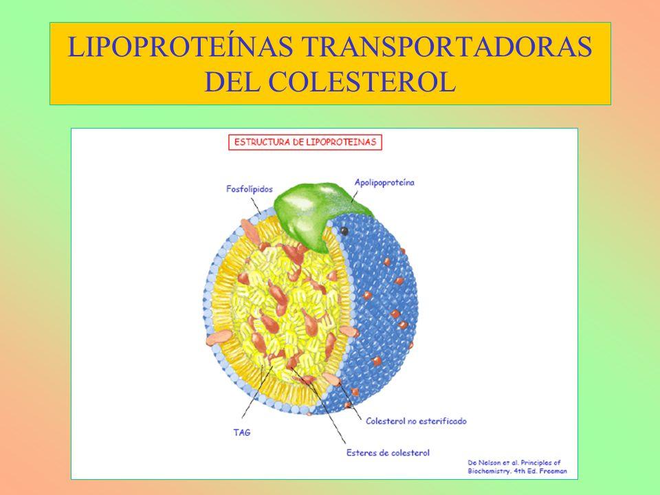 LIPOPROTEÍNAS TRANSPORTADORAS DEL COLESTEROL