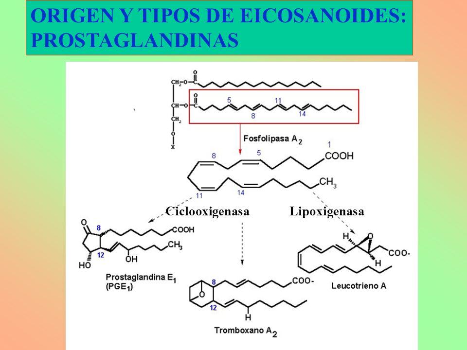 ORIGEN Y TIPOS DE EICOSANOIDES: PROSTAGLANDINAS CiclooxigenasaLipoxigenasa