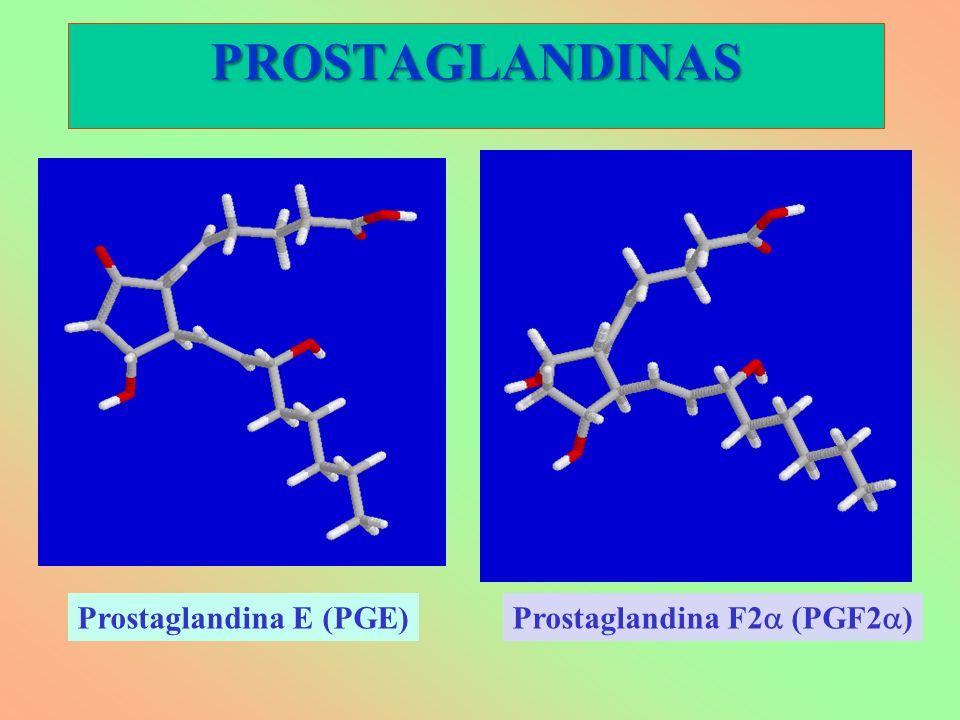 Prostaglandina E (PGE) Prostaglandina F2 (PGF2 ) PROSTAGLANDINAS