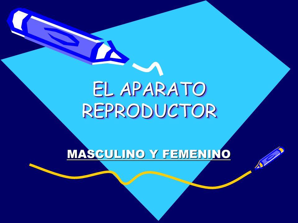 EL APARATO REPRODUCTOR EL APARATO REPRODUCTOR MASCULINO Y FEMENINO